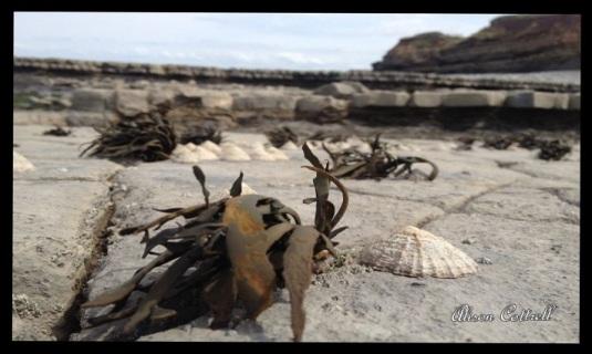 Seaweed & Seashells