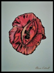 Wildflower Poppy